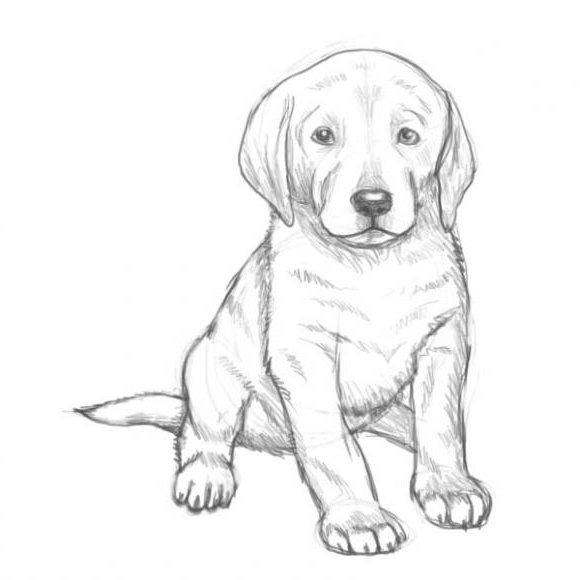 Рисунки на Новый год 2018 с собакой