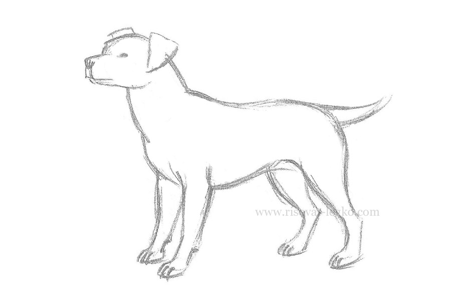 Картинки для собак