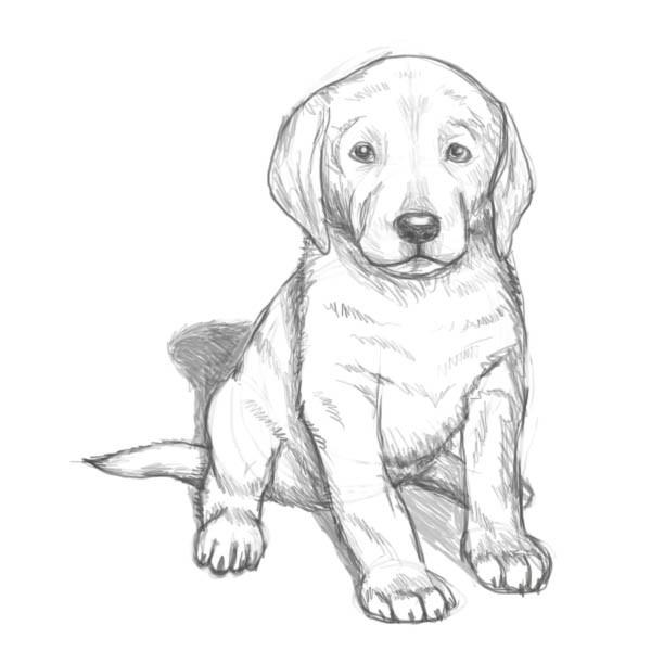 Собака, нарисованная карандашом на Новый год 2018