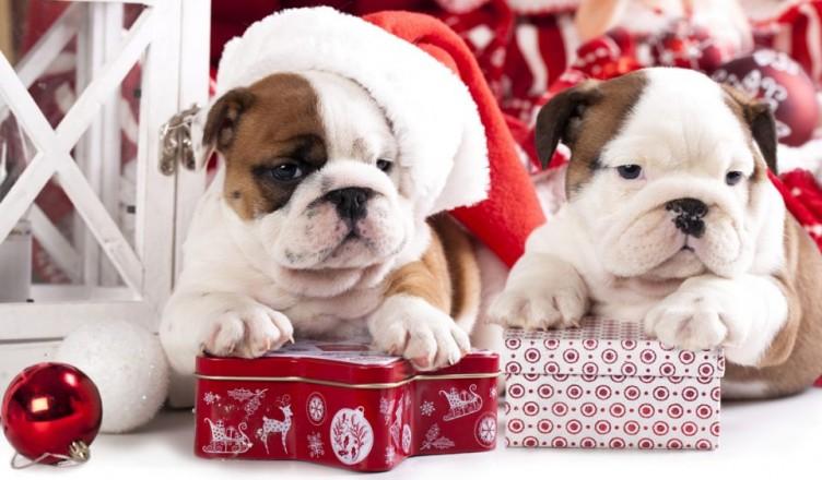 Идеи подарков на Новый год Собаки 2018