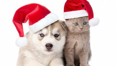 Новый год Собаки 2018